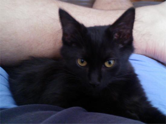 kittykitty3